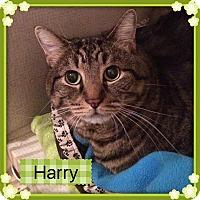 Adopt A Pet :: HARRY - Hamilton, NJ