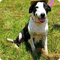 Adopt A Pet :: Paulette - Simsbury, CT