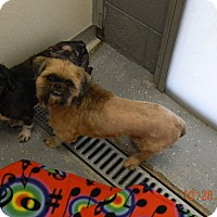 Adopt A Pet :: TINY - Sandusky, OH