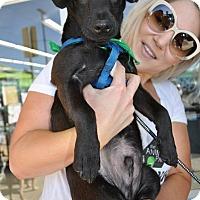 Adopt A Pet :: Barney - San Diego, CA