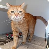Adopt A Pet :: Rex (Petsmart New Bern) - Newport, NC