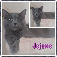 Adopt A Pet :: Jejune - Cedar Springs, MI