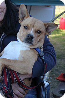 Retriever (Unknown Type) Mix Dog for adoption in Wichita Falls, Texas - Mikki Lynn