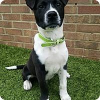 Adopt A Pet :: Orlando - Germantown, TN