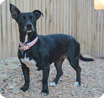Dachshund Mix Dog for adoption in Hurricane, Utah - LOVIE