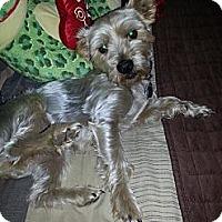 Adopt A Pet :: Orion - Martinsburg, WV