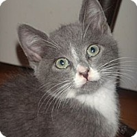 Adopt A Pet :: Ivan - Escondido, CA