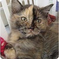 Adopt A Pet :: Muffie - Winter Haven, FL