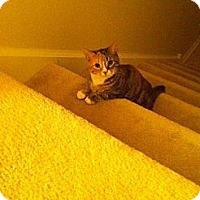 Adopt A Pet :: Penny - West Dundee, IL
