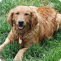 Adopt A Pet :: Judy - Denver, CO