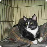 Adopt A Pet :: Eva Gabore - Lombard, IL