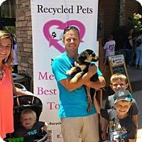 Adopt A Pet :: Paddington - Sacramento, CA