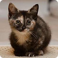 Adopt A Pet :: Winnie - Reston, VA