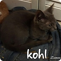 Adopt A Pet :: Kohl - McDonough, GA