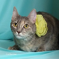 Adopt A Pet :: Catherine - Kerrville, TX