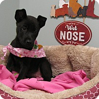 Adopt A Pet :: Brena - Groton, MA