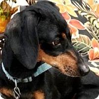 Adopt A Pet :: Roxanne Ramen - Houston, TX