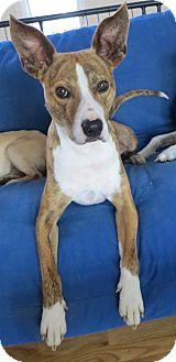 Terrier (Unknown Type, Medium) Dog for adoption in Matthews, North Carolina - Tigger