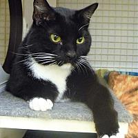 Adopt A Pet :: Star - Naples, FL