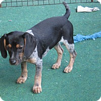 Adopt A Pet :: edele - Hagerstown, MD