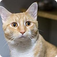 Adopt A Pet :: Boston - New York, NY