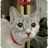 Adopt A Pet :: Space - Pueblo West, CO
