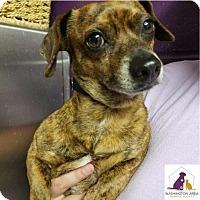 Adopt A Pet :: Arthur - Eighty Four, PA