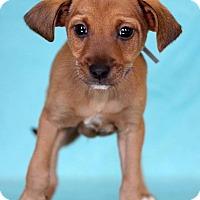 Adopt A Pet :: Triangle - Waldorf, MD