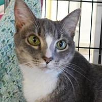 Adopt A Pet :: Sienna - Winston-Salem, NC