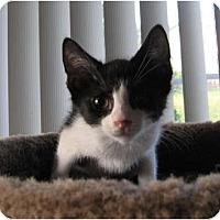 Adopt A Pet :: The Count - Catasauqua, PA