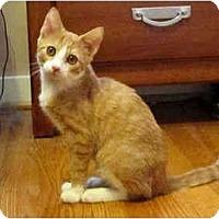 Adopt A Pet :: Conrad - Colmar, PA
