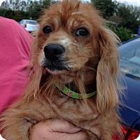 Adopt A Pet :: Glenna Jo - Sugarland, TX