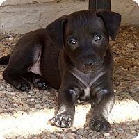 Adopt A Pet :: Paco - La Habra Heights, CA