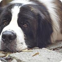 Adopt A Pet :: Benji - Bellflower, CA