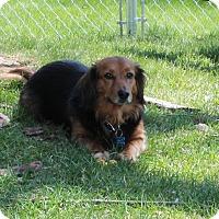 Adopt A Pet :: Jodi - Greenwood, MI