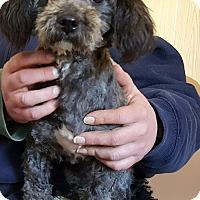 Adopt A Pet :: Havana - Antioch, IL