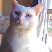 Adopt A Pet :: Snowflake - Smyrna, GA