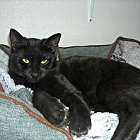 Adopt A Pet :: Huey - Spring Lake, NJ