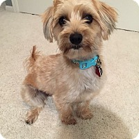 Adopt A Pet :: Aleiha - Chicago, IL