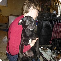 Adopt A Pet :: Bette - Glastonbury, CT