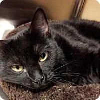 Adopt A Pet :: Lila - Worcester, MA