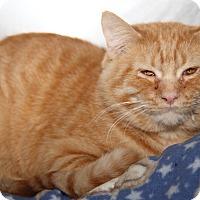 Adopt A Pet :: Gabriel (aka Gabe) - Marietta, OH
