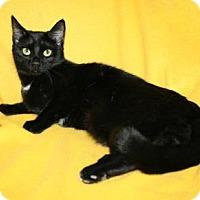 Adopt A Pet :: Muse - Bradenton, FL