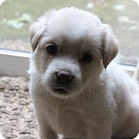 Adopt A Pet :: Falky - Plainfield, IL