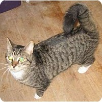 Adopt A Pet :: Petrie - Montreal, QC