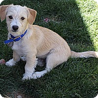 Adopt A Pet :: Asesa - Scottsdale, AZ