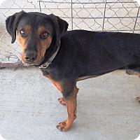 Adopt A Pet :: Rowdy - Yerington, NV