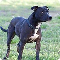 Adopt A Pet :: Lulu - Broken Arrow, OK