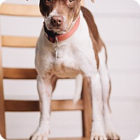 Adopt A Pet :: Chaca Poo - Portland, OR