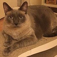 Adopt A Pet :: Rocco - North Highlands, CA